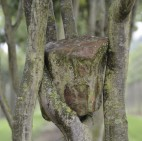 {treegroup_title}